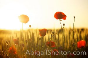 ADVENTURE | New Hope - Abigail Shelton
